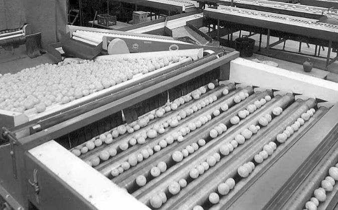 Uno de los almacenes de Agrofruit.