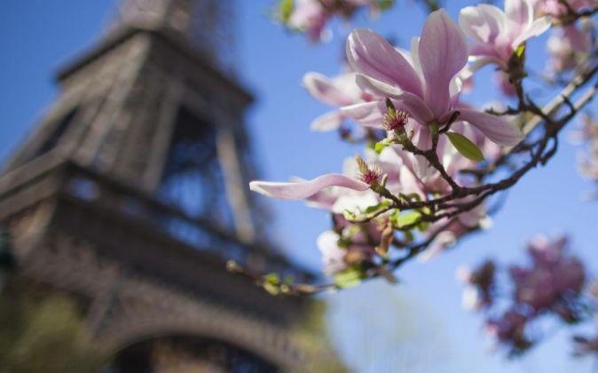 Flores junto a la torre Eiffel de París.