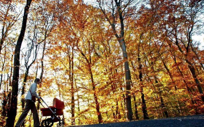 Una mujer pasea con un carrito por el bosque.