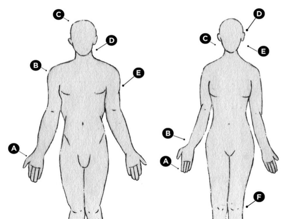 Ilustración con los puntos calientes donde aplicar la fragancia.