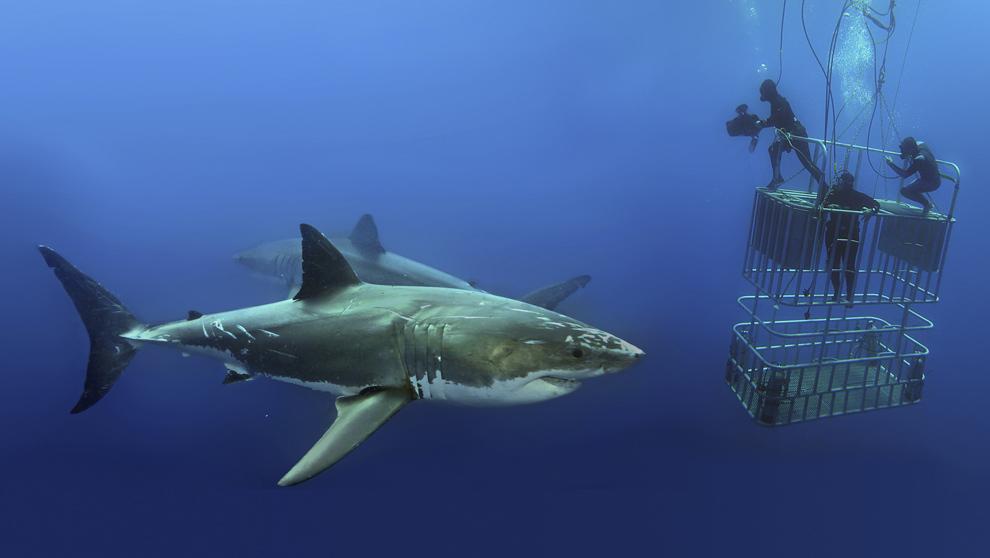 <strong>1. Tiburones y mantas gigantes en México.</strong> La...