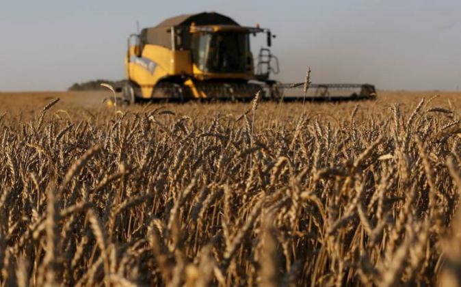 Una plantación de trigo en Rusia, que este año pasaría a ser el...
