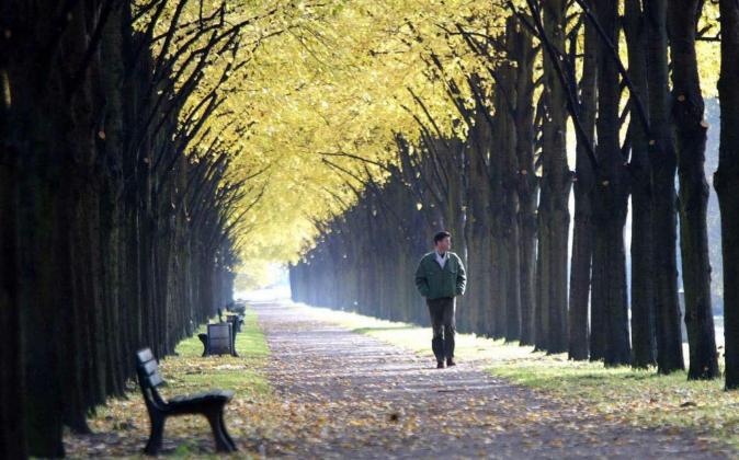 Un hombre pasea entre los árboles de un parque de Hannover...