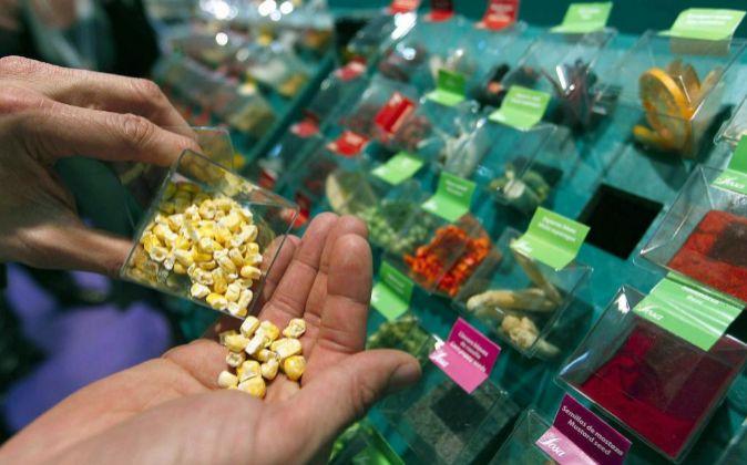 Un visitante comprueba el estado de una muestra de maíz liofilizado.