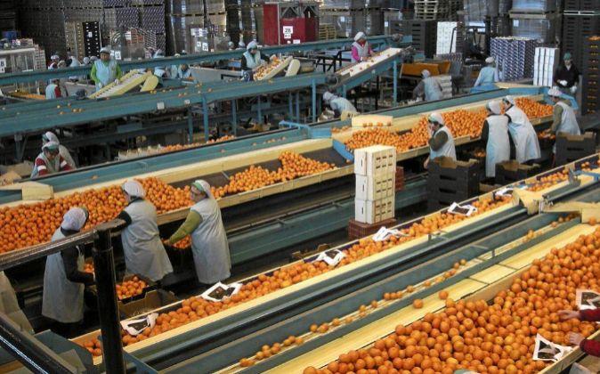 Envasado de naranjas en un almacén de cítricos.