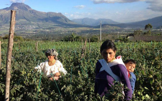 Una comunidad de indígenas kichwas, Santa Rita, y la marca Pacari han...