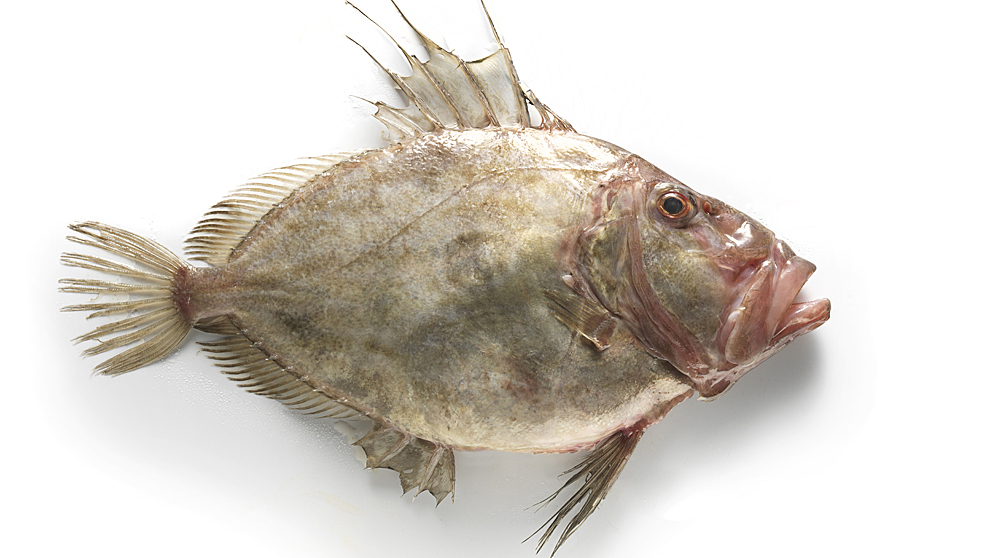 Cuenta con un ojo a cada lado, lo que le diferencia de otros peces...