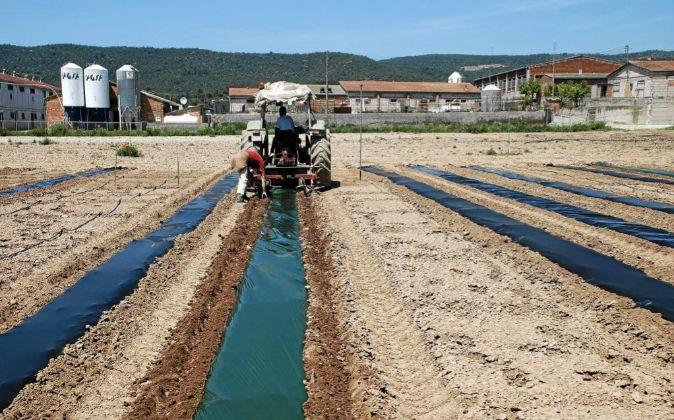 Un tractor trabaja en un campo de cultivo.