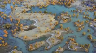 Los álamos salpican el curioso paisaje formado por los bancos de...