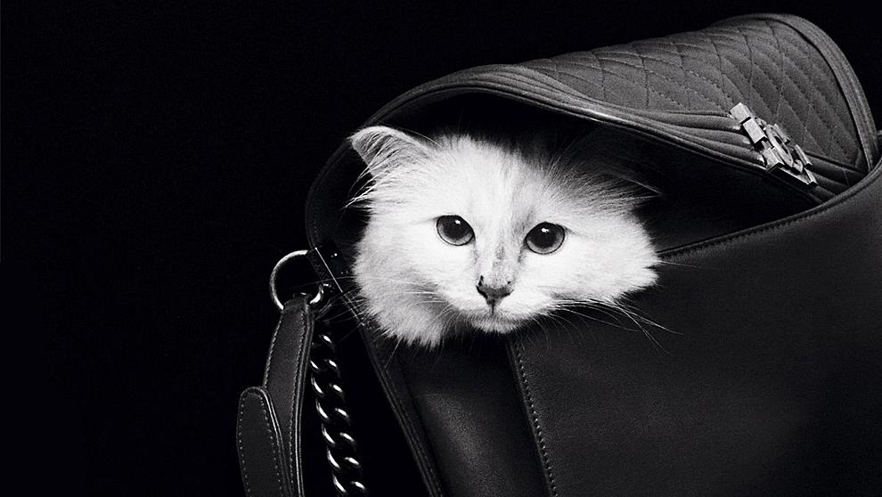 Choupette, gata de raza birmana, es la mascota de Karl Lagerfeld desde...