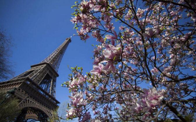 Los árboles florecen junto a la torre Eiffel en París, el 26 de...