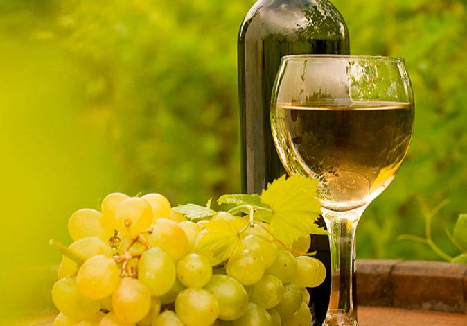 Algunas variedades de uvas se han recuperado gracias al esfuerzo de...