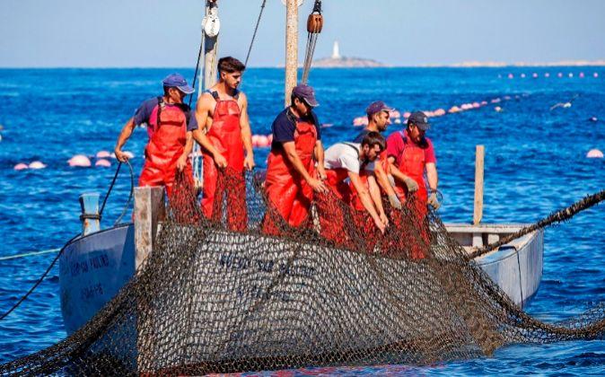 Pescadores de Barbate trabajando en la 'levantá' del atún...