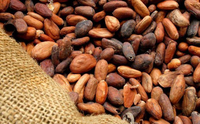 Detalle de las semillas del cacao antes de que les quiten la piel.