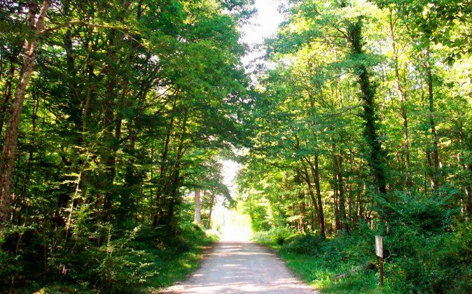 Uno de los atractivos del Valle del Loira son sus bosques, que rodean...