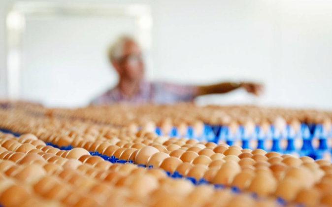 Vista de la producción de huevos de una granja en Putten (Holanda) el...