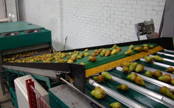 Imagen de archivo de una cooperativa en donde se trabaja con peras.