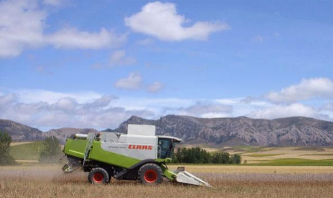 Alcaliber cultiva 14.000 hectáreas de la planta 'Papaver...