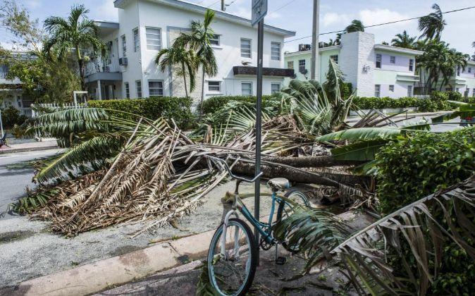 Árboles caídos tras el paso del huracán Irma en Miami Beach,...