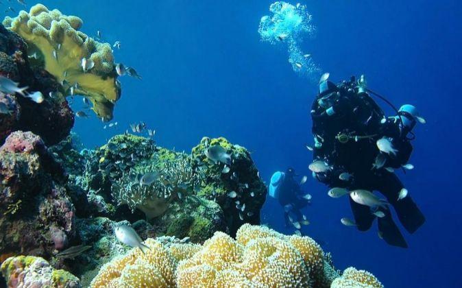 Buzo profesional de PharmaMar, en una de las expediciones marinas que...