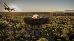 Nay Palad Bird Nest