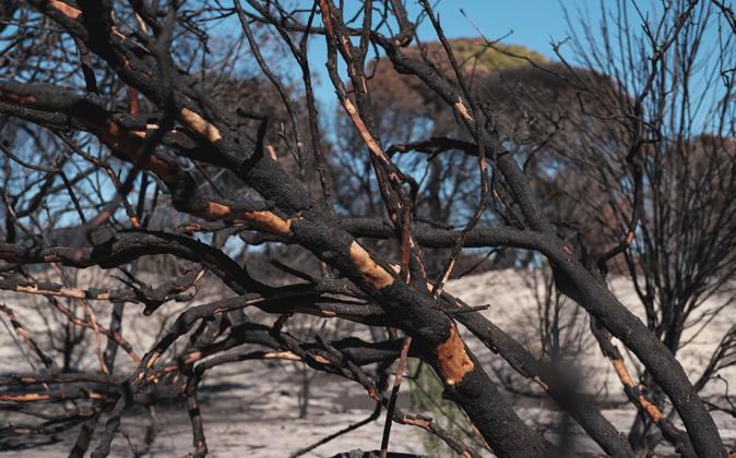 Estos son los efectos del incendio producido en junio en Doñana.