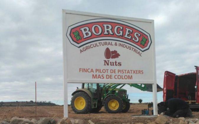 Finca de pistachos de Borges.