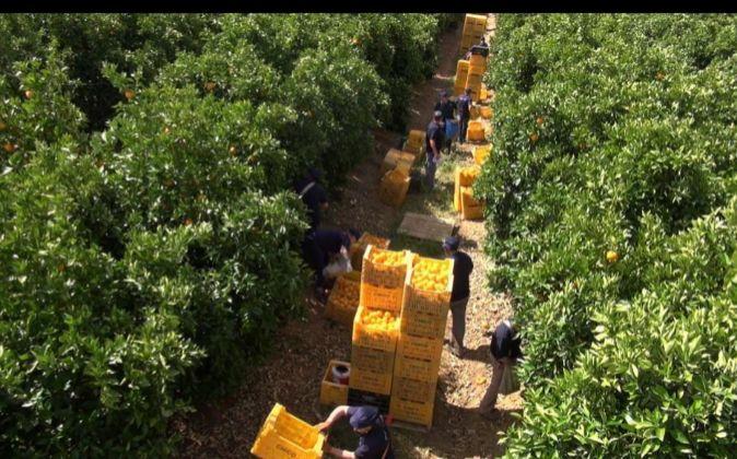 Campos de naranjos de Martinavarro.