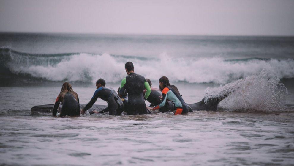 Los surfistas, ayudando a la cría de ballena en Zarautz.
