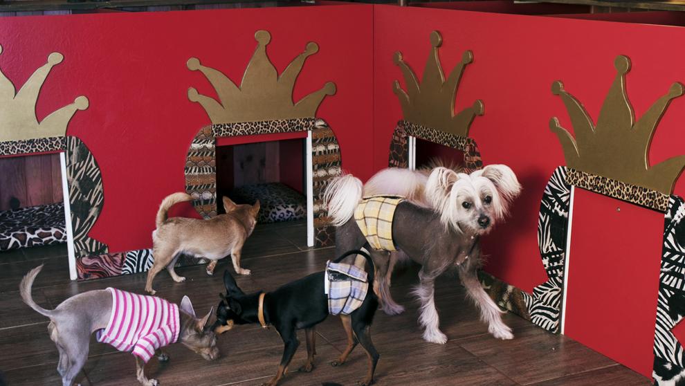El Tiny Dog Hotel cinco estrellas, una guardería y residencia de lujo...