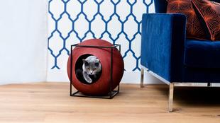 Meyou, un mueble pet-frendly.