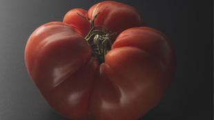 Los tomates de El Qüenco de Pepa se cultivan en una huerta de Ávila.