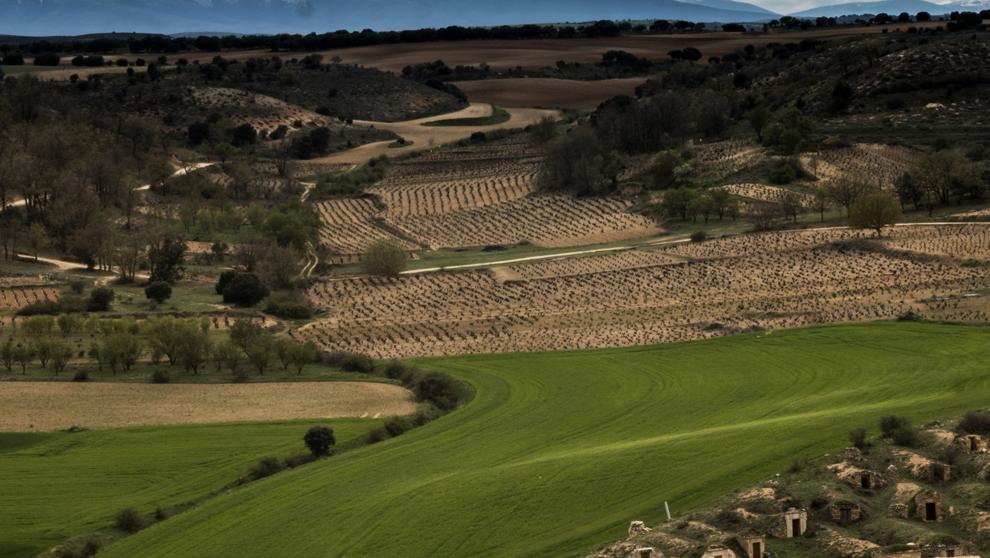 Ribera del Duero, la Denominación de Origen más joven que afronta al...