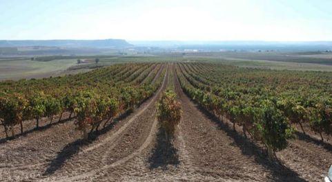 Los drones han captado diferentes imágenes del viñedo, que tras un...