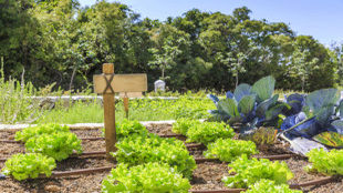 Los huéspedes pueden plantar sus propias verduras orgánicas en el...
