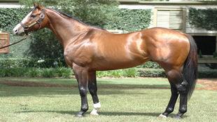Los caballos han sido siempre una especie animal conocida por el alto...