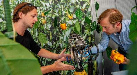 Uno de los proyectos de la Universidad de Wageningen es el uso de la...