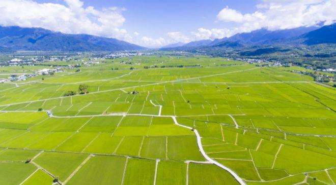 Campo de arroz en Taiwan