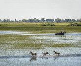 La mejor vida salvaje vuelve de mano de Wilderness Safaris, que acaba...