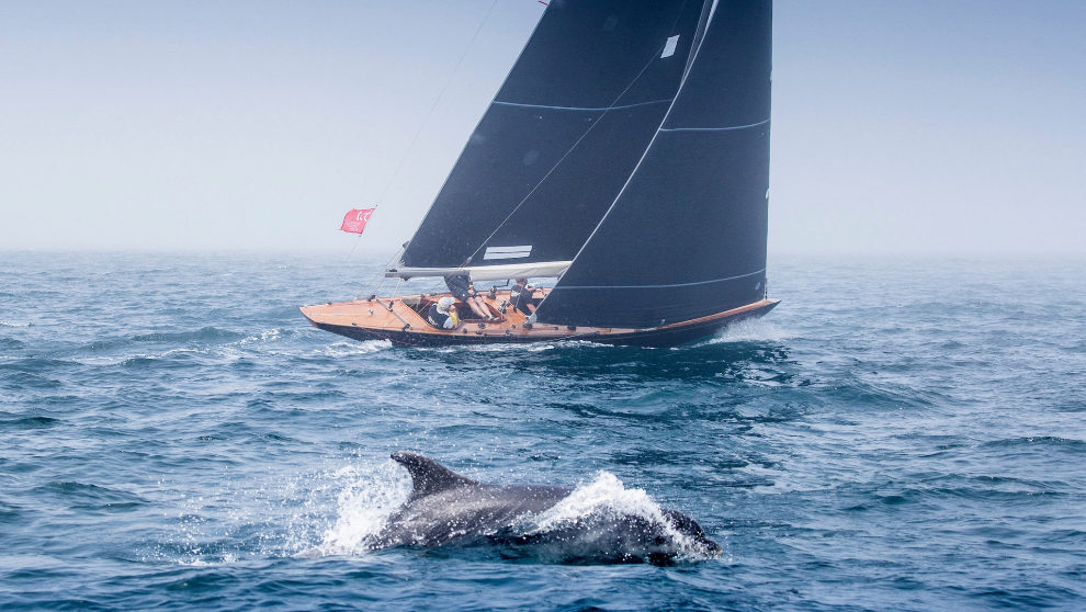Un delfín salta frente a un miembro de la flota de 6 Metros en...