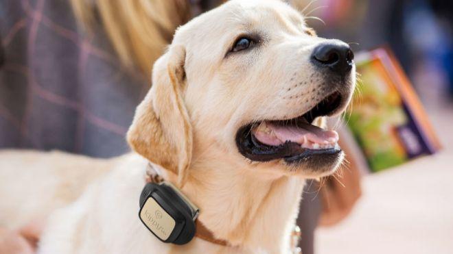 Una Ley para velar por el bienestar físico y emocional de los animales
