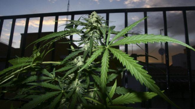 el-supremo-afirma-que-los-clubes-de-cannabis-son-sólo-para-adictos-y-grupos-pequeños