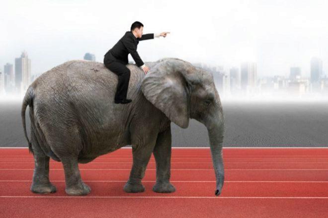 Elefante empresarial