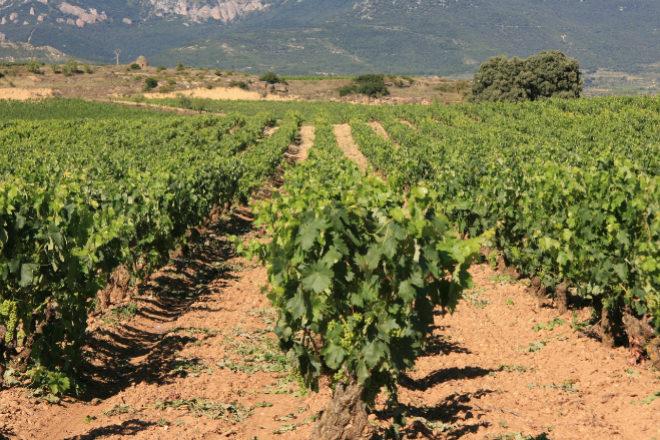 Las bodegas de Rioja Alavesa confían en la reactivación de bares y restaurantes locales para frenar el derrumbe de ventas que vaticinan.
