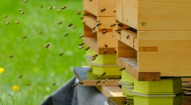 Imagen de las colmenas inteligentes que T-Systems ha instalado en...
