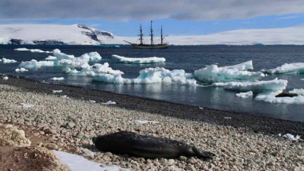 Foca de Weddell tirada a la bartola y el Europa al fondo, en Isla...