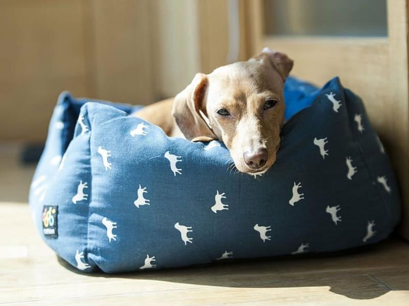 El  e-commerce de productos para mascotas recibe un fuerte empujón con la crisis del coronavirus