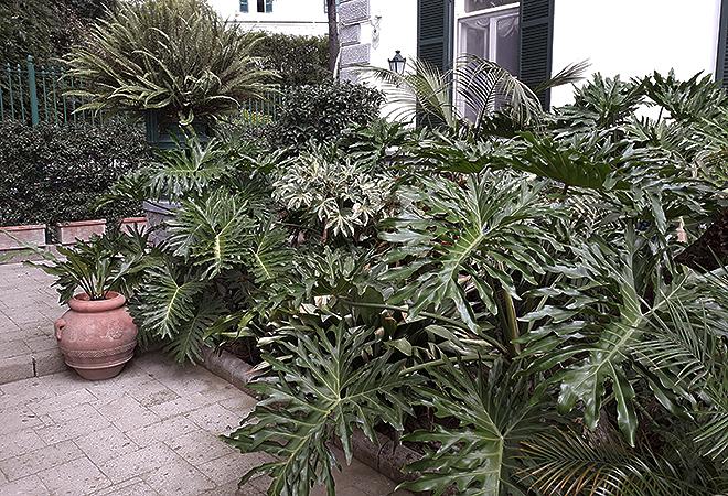 Macetas y parterres con distintos tipos de palma y helecho.