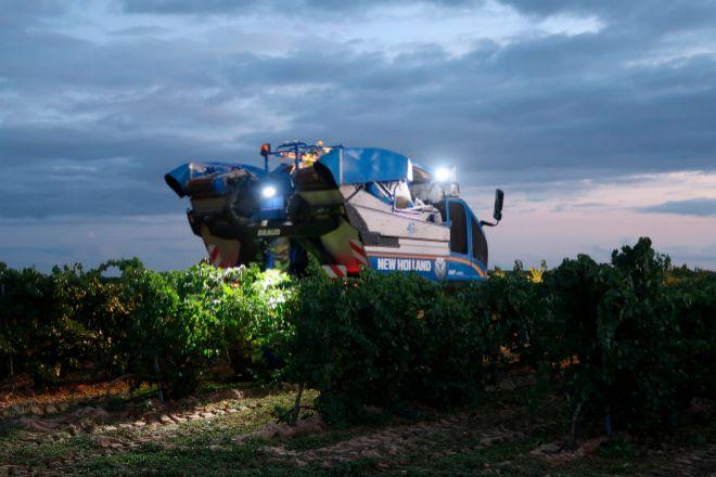 La vendimia en Rueda es de noche para evitar la oxidación de la uva.