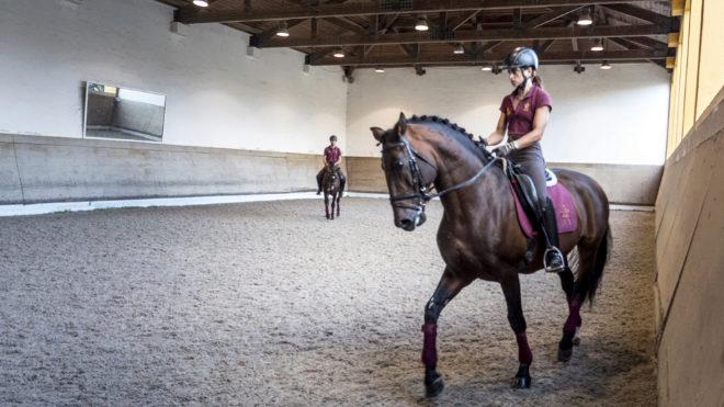 Los caballos lusitanos ejecutan con destreza los movimientos más complicados del dressage o doma clásica.